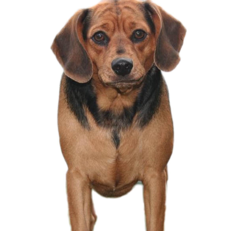 Meagle Breed