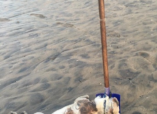 Dog Tied to Shovel Marina del Ray