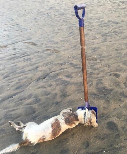 Dog Tied to Shovel Marina del Ray
