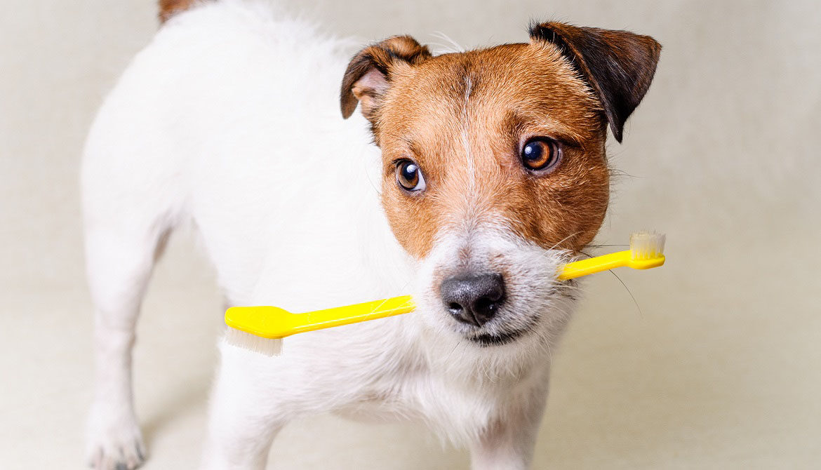 pet health questions dogs constipation