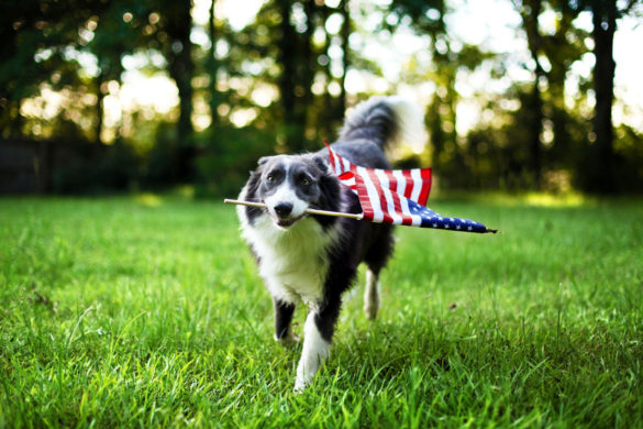 Dogs On Independence Day