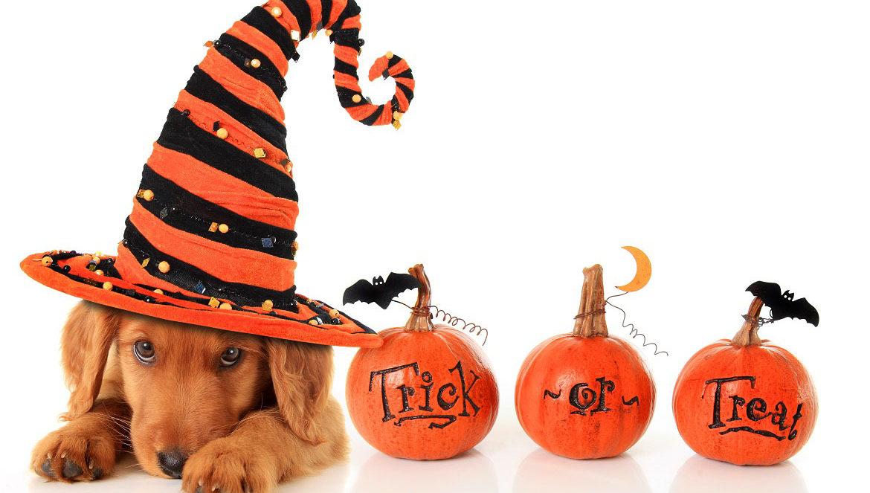 diy_dog_costumes_halloween