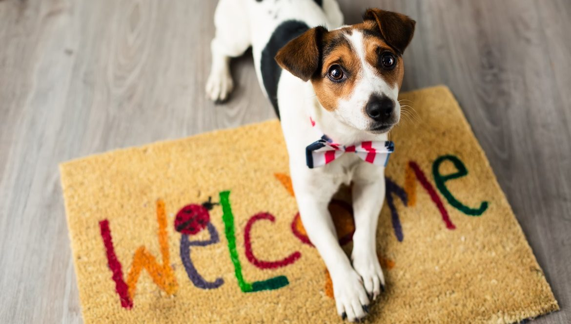 First time dog buyer's guide