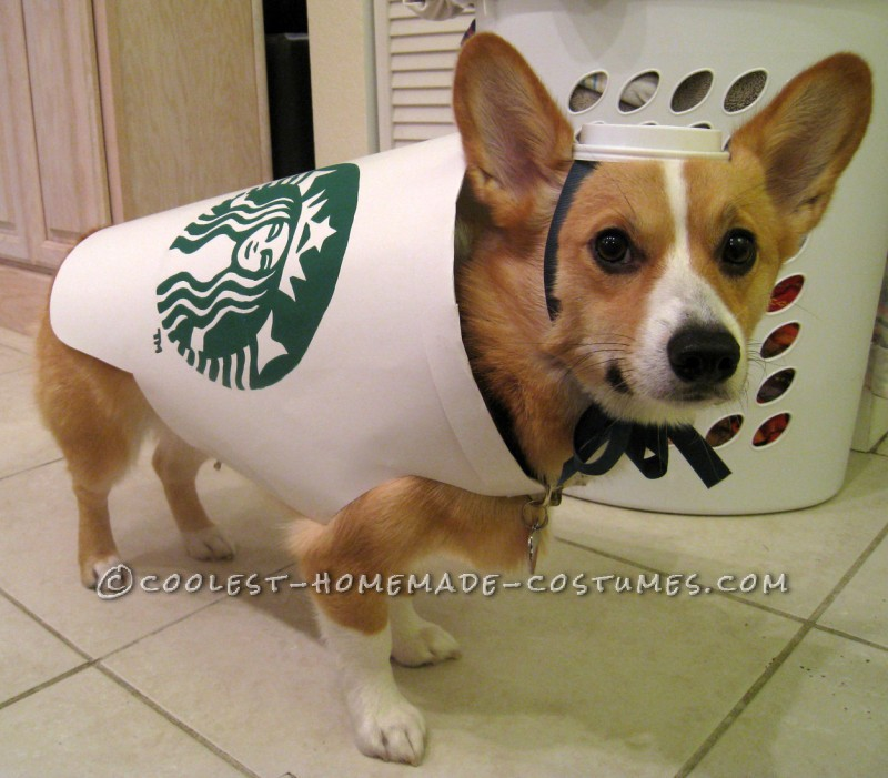 11 best diy dog halloween costumes for 2016 paws n pups 11 best diy dog halloween costumes for 2016 solutioingenieria Choice Image