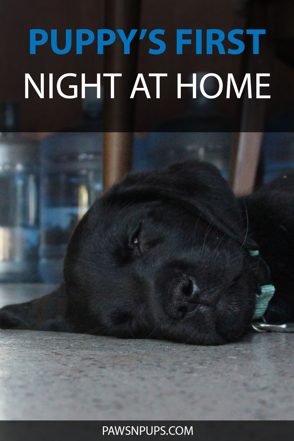 Puppy's First Night At Home - black Labrador Retriever puppy sleeping on the concrete floor with large water bottles in the back.