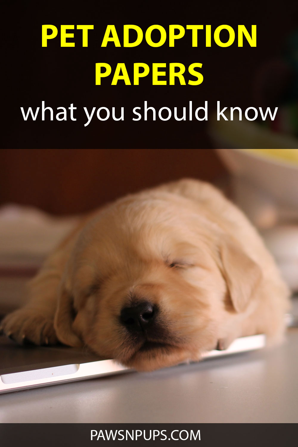 Pet Adoption Papers - What You Should Know - Golden Retriever puppy lying on laptop computer on a desk.